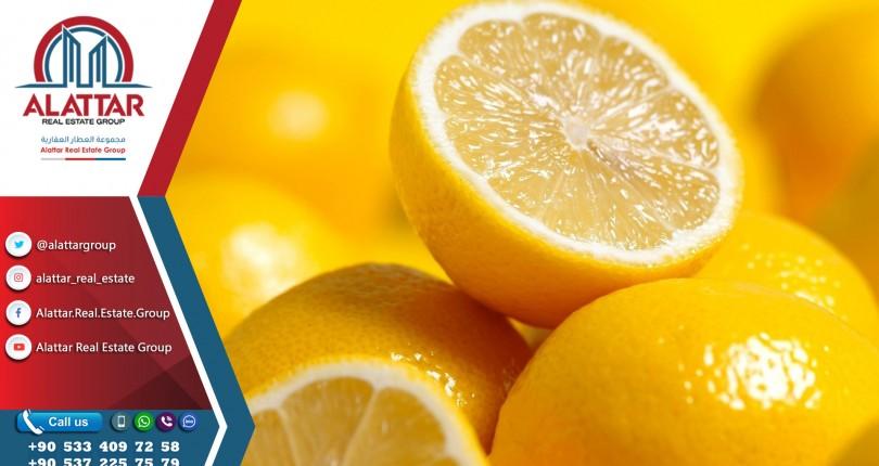 10 ملايين دولار صادرات الليمون التركي إلى روسيا في الشهر الأول من 2019